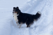 2010-12-18-027-queeny-mocca-im-schnee