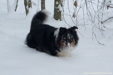 2010-12-17-030-queeny-mocca-im-schnee
