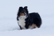 2010-12-17-003-queeny-mocca-im-schnee